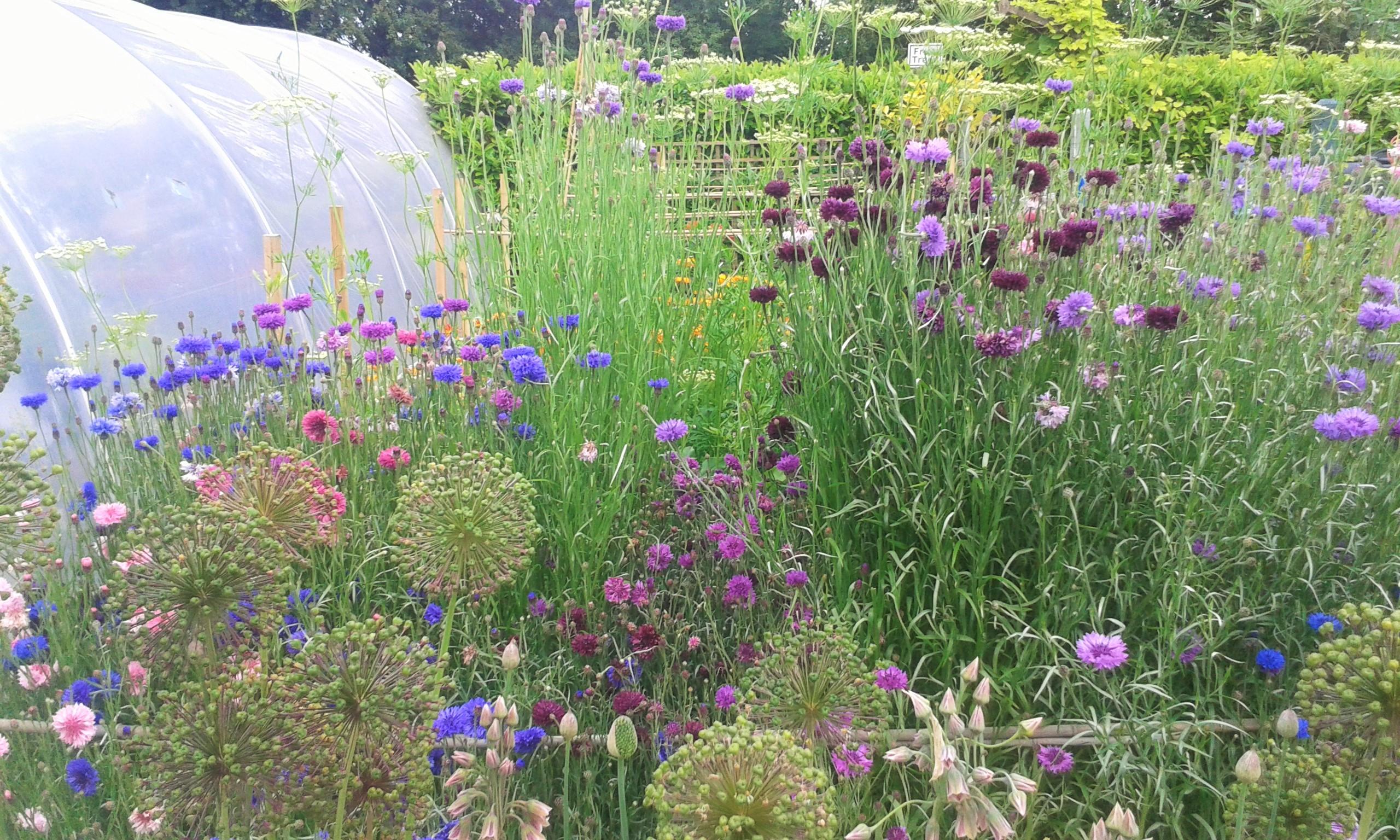 Garden Centre: Online Garden Centre In Ireland